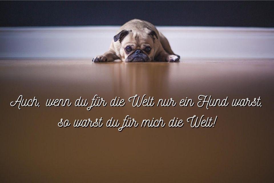 Hund gestorben Spruch auf Bild