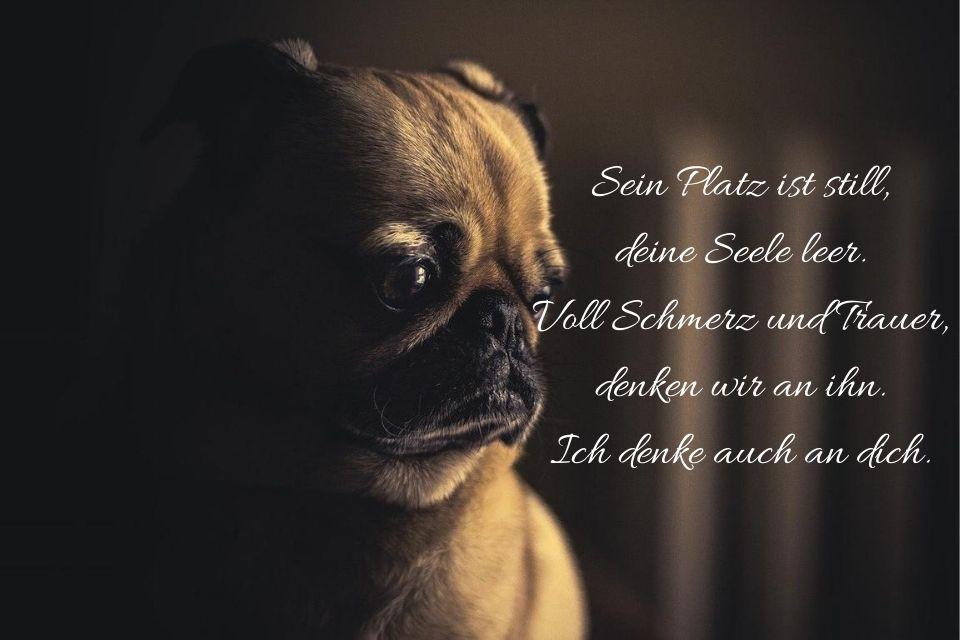 Bild mit Hund gestorben Spruch