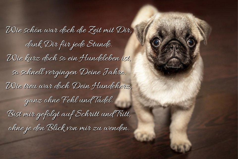 Spruch Hund gestorben