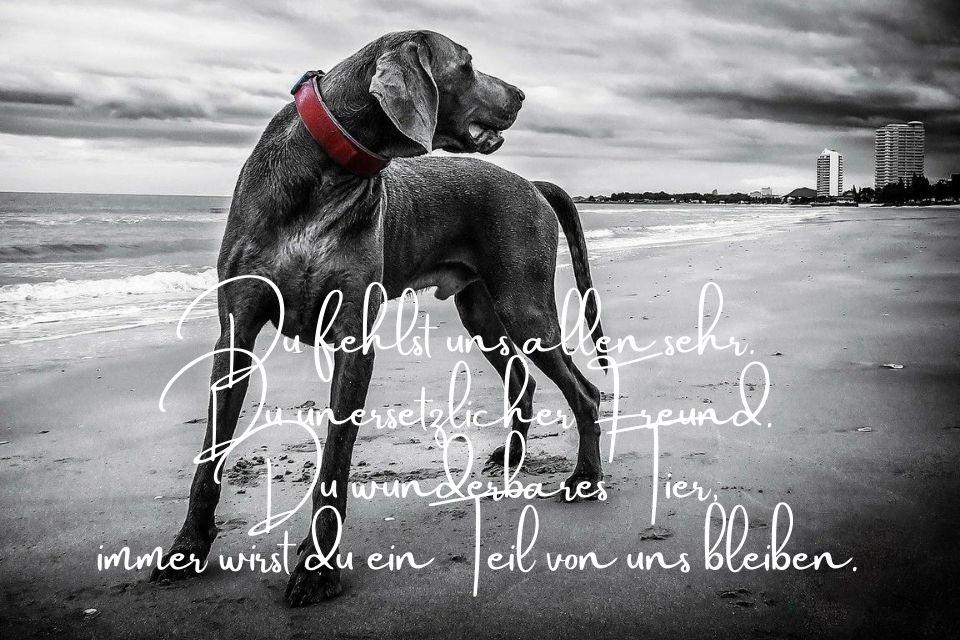 Spruch mit Hund im Hintergrund