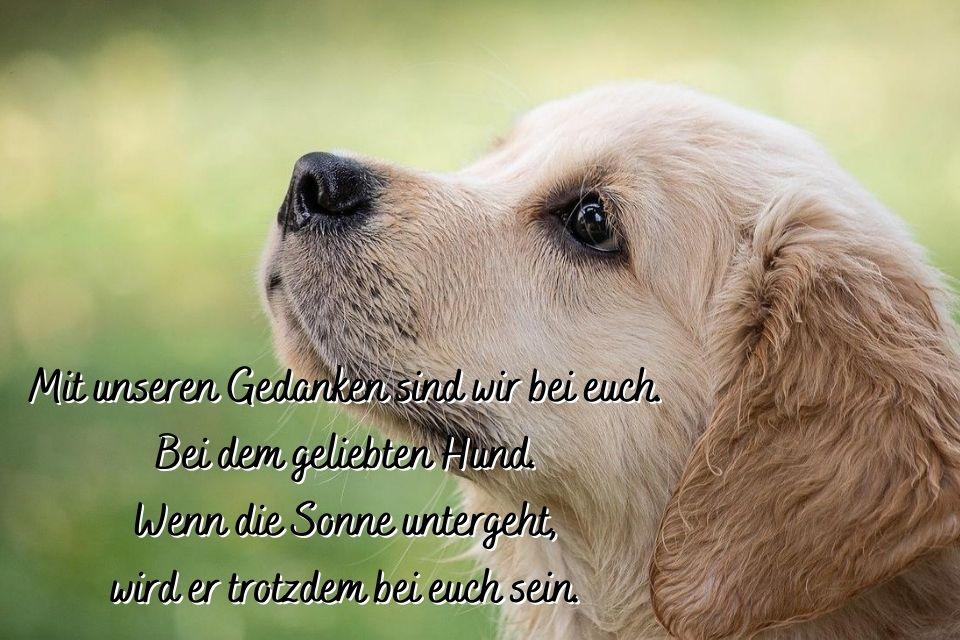 Hund im Hintergrund mit Spruch