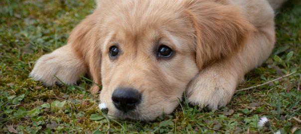 trauriger Hund auf Wiese