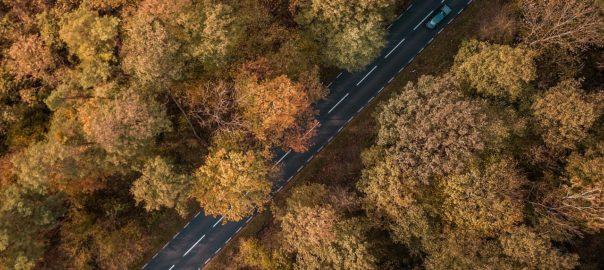 Straße die durch den Wald führt
