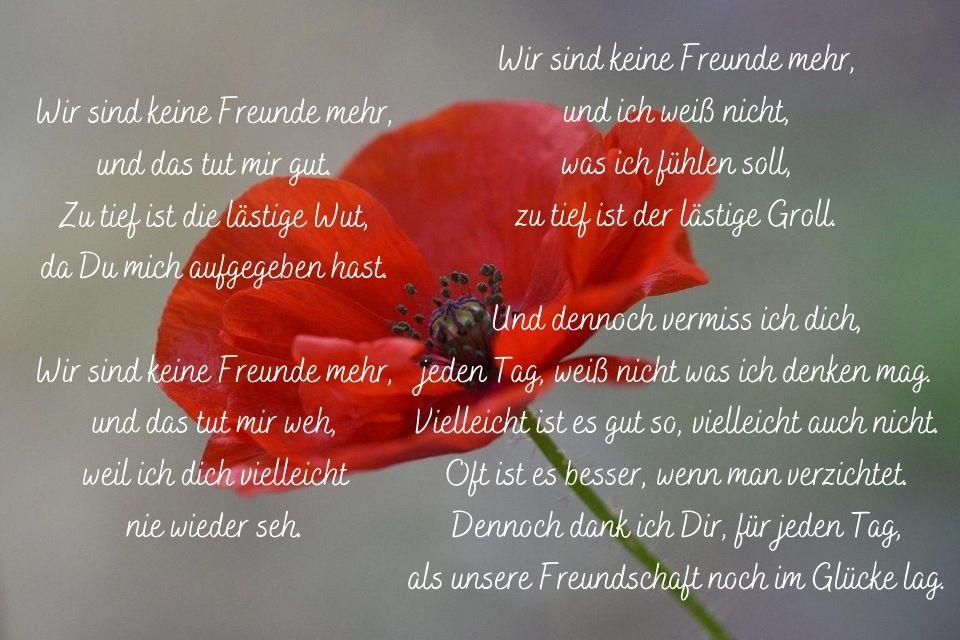 Rote Blume mit einem Freundschaft beendet Spruch